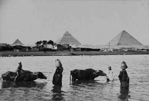 الفلاح المصرى قديماً قبل أن يصبح متهماً بحرق قش الأرز